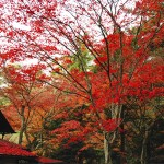 久しぶりの広島観光